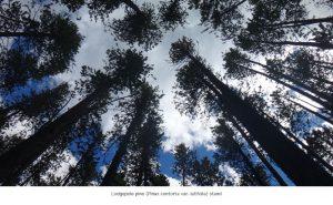 Photo of field season trees