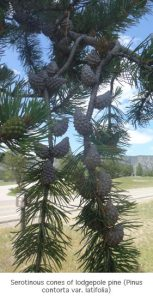 Photo of field season cones
